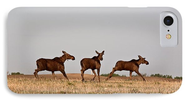 Female Moose With Male Calves In Saskatchewan Field Phone Case by Mark Duffy