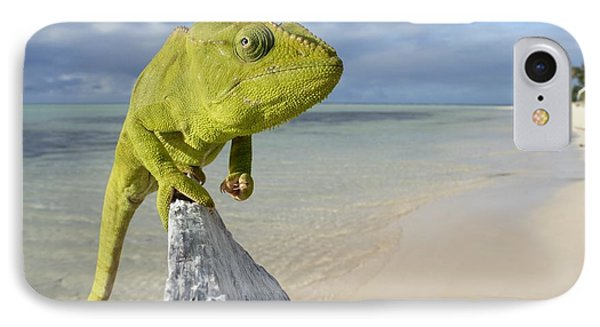 Female Oustalet's Chameleon Phone Case by Alex Rosenfield and Photo Researchers