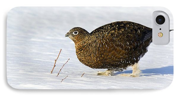 Female Red Grouse In Snow Phone Case by Duncan Shaw