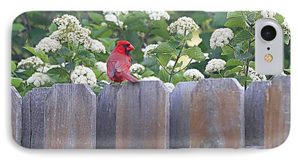 IPhone Case featuring the photograph Fence Top by Elizabeth Winter