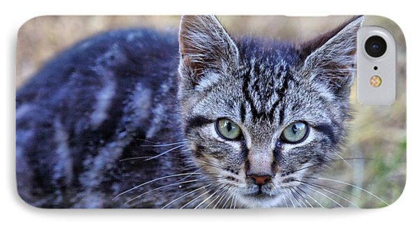IPhone Case featuring the photograph Feral Kitten by Chriss Pagani