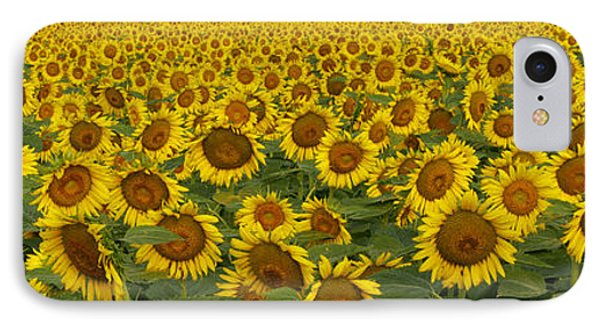 Field Of Domestic Sunflowers Phone Case by Kenneth M Highfill and Photo Researchers