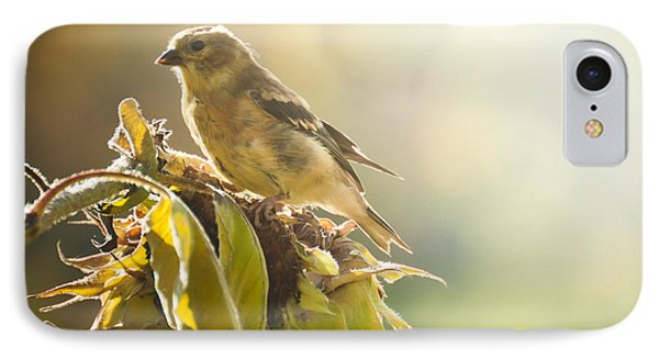 IPhone Case featuring the photograph Finch Aglow by Cheryl Baxter