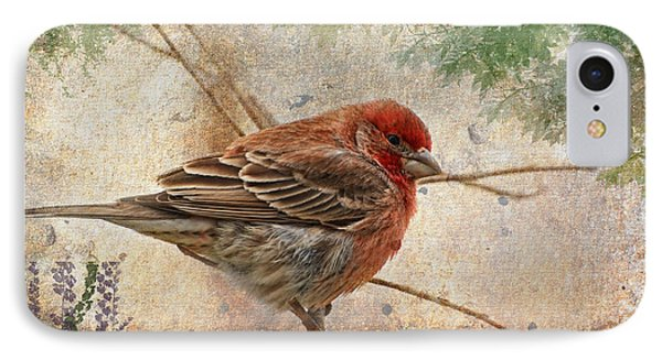 Finch Art Or Greeting Card Blank Phone Case by Debbie Portwood