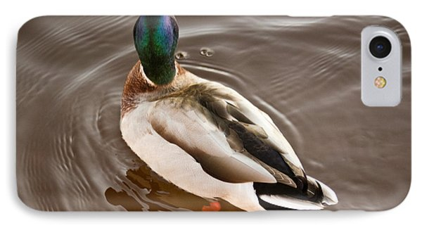 IPhone Case featuring the photograph Fine Feathered Mallard Duck by Ann Murphy