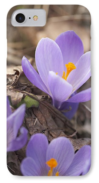 First Crocus Blooms IPhone Case