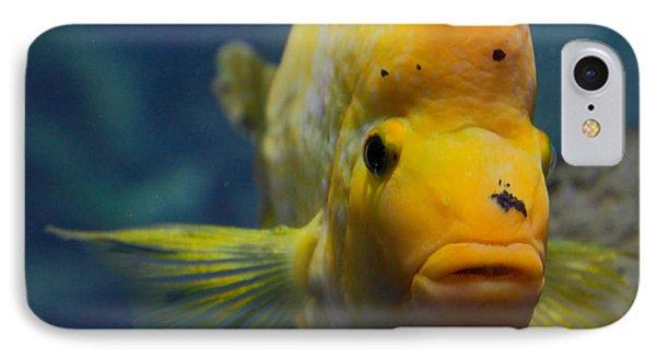Fish IPhone Case by Milena Boeva