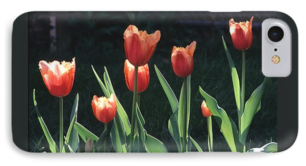 Flared Red Yellow Tulips IPhone Case