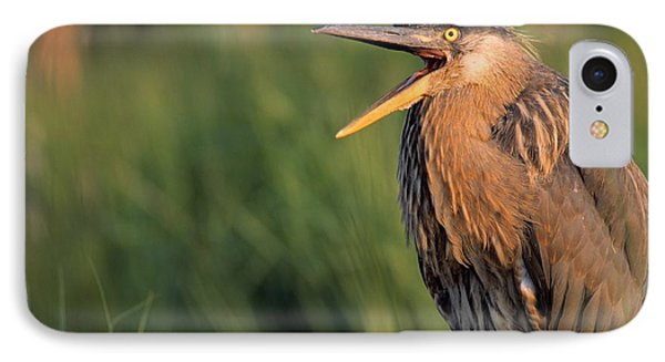 Fledgling Great Blue Heron Phone Case by Natural Selection Bill Byrne