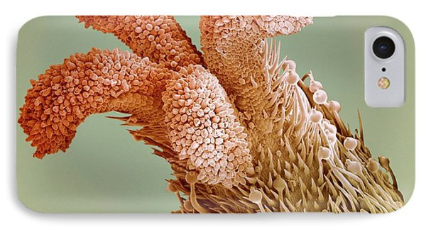 Flower Stigma, Sem Phone Case by Steve Gschmeissner