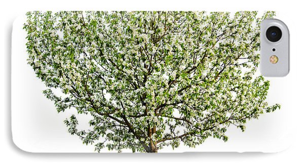 Flowering Apple Tree IPhone Case
