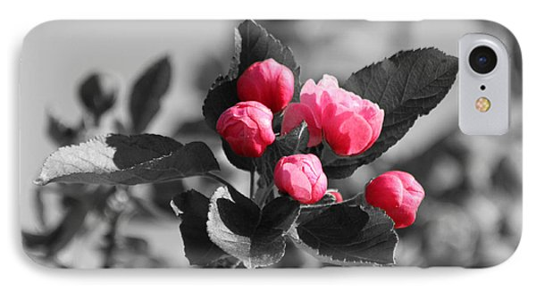 Flowering Crabtree In Select Color Phone Case by Mark J Seefeldt