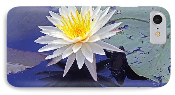 Flowering Lily-pad- St Marks Fl IPhone Case