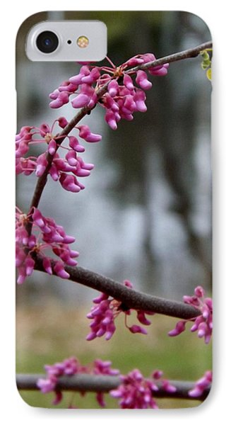 IPhone Case featuring the photograph Flowering Tree 1 by Gerald Strine