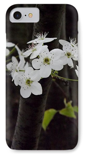 IPhone Case featuring the photograph Flowering Tree 4 by Gerald Strine