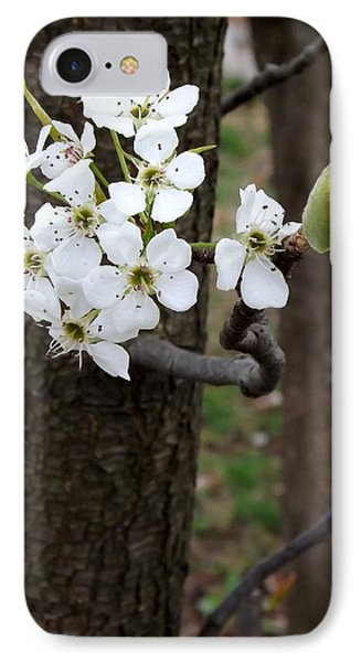 IPhone Case featuring the photograph Floweringtree 2 by Gerald Strine