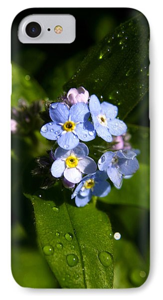 Forget Me Not IPhone Case by Ralph A  Ledergerber-Photography