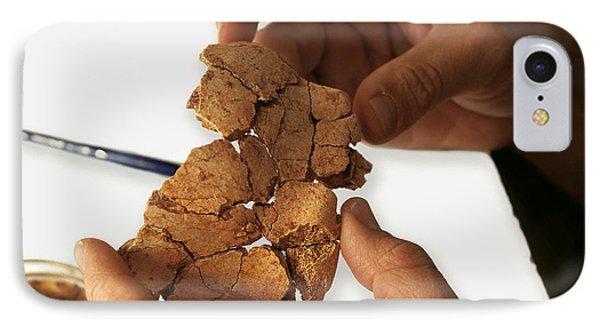Fossilised Frontal Bone, Gran Dolina IPhone Case