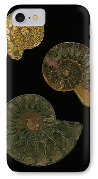 Fossilized Sea And Marine Shells Or IPhone Case