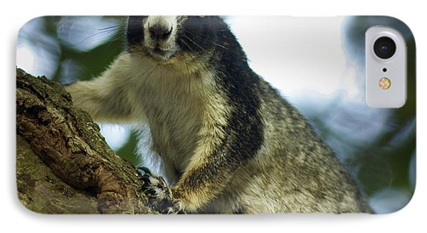 Fox Squirrel Phone Case by Phill Doherty