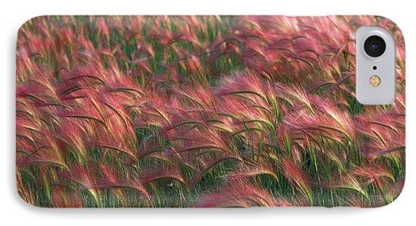 IPhone Case featuring the photograph Foxtail Barley by Doug Herr
