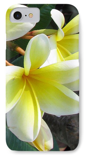 IPhone Case featuring the photograph Frangipani Up Close by Debi Singer