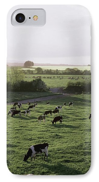 Friesian Bullocks, Ireland Herd Of Phone Case by The Irish Image Collection