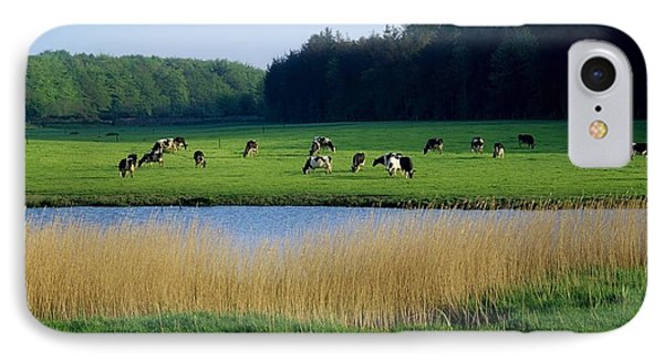 Friesian Cattle, Near Cobh, Co Cork Phone Case by The Irish Image Collection
