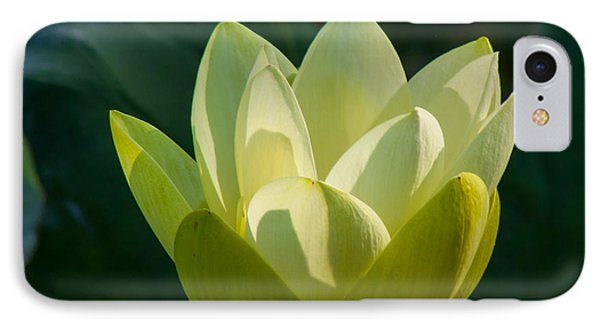 Frog Flowers IPhone Case by Toma Caul