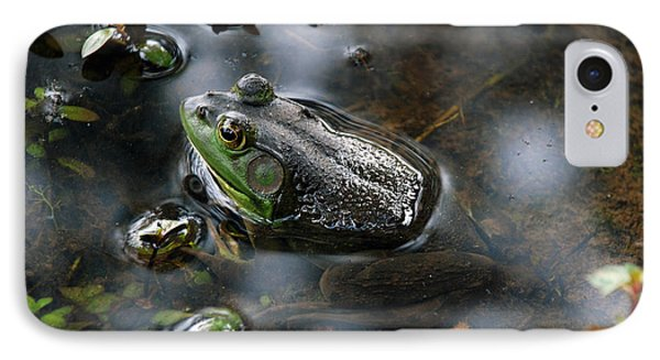 Frog In The Millpond IPhone Case by Kay Lovingood