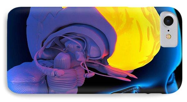 Frontal Lobe In The Brain, Artwork Phone Case by Roger Harris