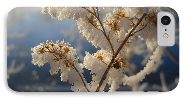 Frosty Dry Wood Aster IPhone Case