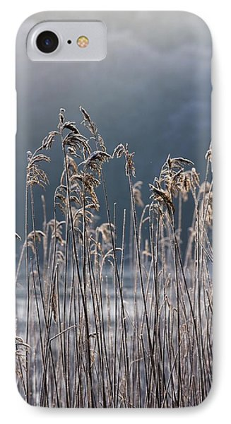 Frozen Reeds At The Shore Of A Lake IPhone Case by John Short