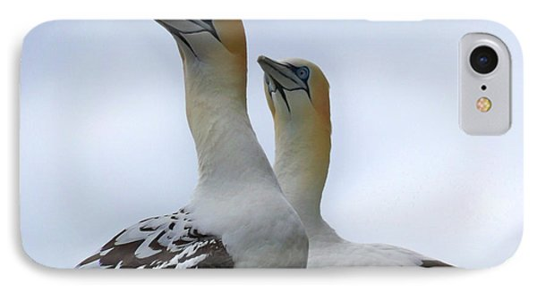 IPhone Case featuring the photograph Gannets by Lynn Bolt