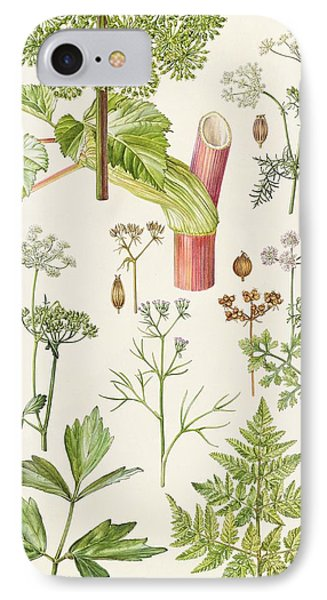 Garden Angelica And Other Plants  Phone Case by Elizabeth Rice