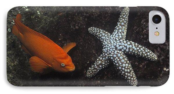 Garibaldi With Starfish Underwater Phone Case by Flip Nicklin