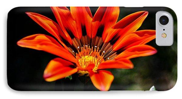 IPhone Case featuring the photograph Gazania Krebsiana Flower by Werner Lehmann