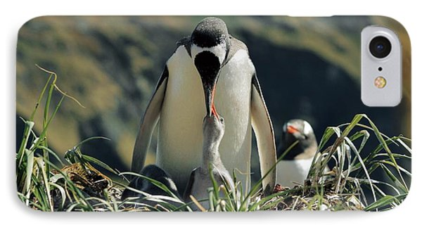 Gentoo Penguin Feeding Chick IPhone Case by Charlotte Main