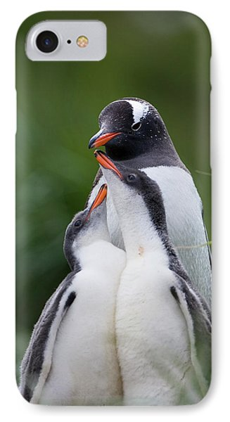 Gentoo Penguin Pygoscelis Papua Hungry Phone Case by Suzi Eszterhas