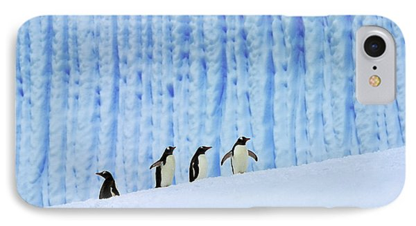 Gentoos On Ice Phone Case by Tony Beck