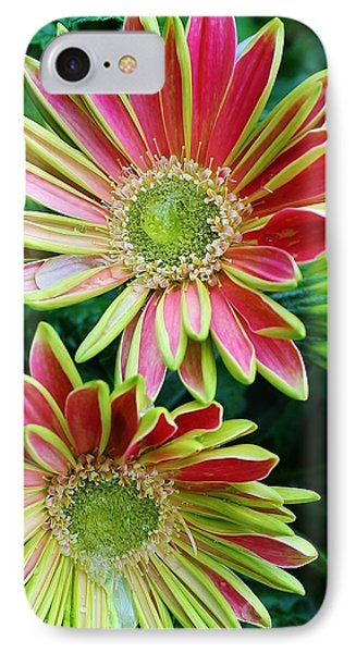 Gerber Daisies IPhone Case by Bruce Bley