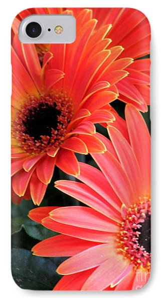 Gerbera Bliss IPhone Case by Rory Sagner