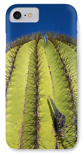 Giant Barrel Cactus Ferocactus Diguetii Phone Case by Tui De Roy