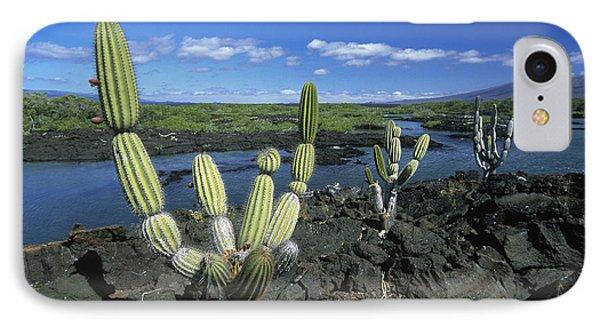 Giant Candelabra Cactus Jasminocereus Phone Case by Winfried Wisniewski
