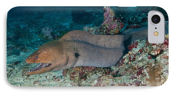 Giant Moray Eel Swimming Phone Case by Mathieu Meur