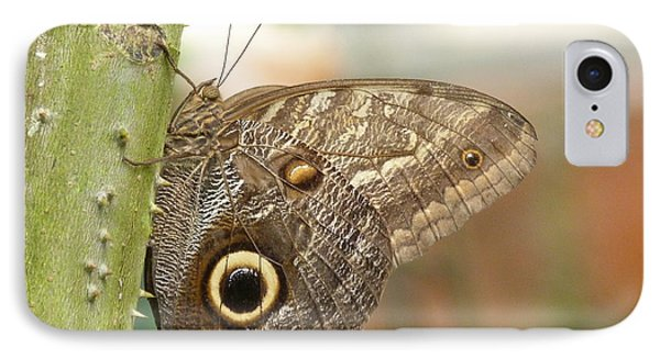 IPhone Case featuring the photograph Giant Owl Butterfly by Lynn Bolt