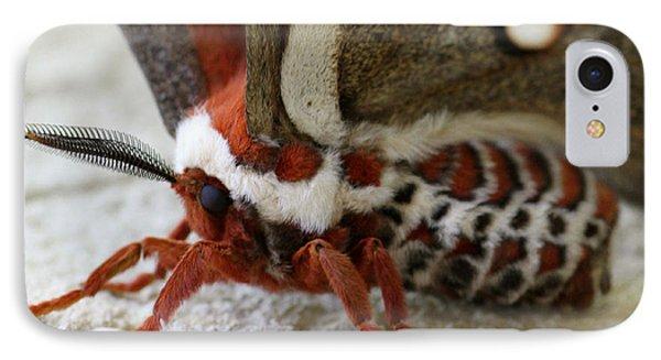 Giant Silkworm Moth 049 IPhone Case by Mark J Seefeldt