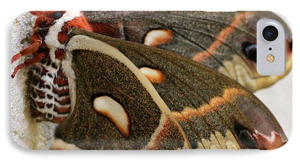 Giant Silkworm Moth 063 IPhone Case by Mark J Seefeldt