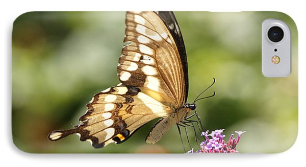 Giant Swallowtail Butterfly Phone Case by Robert E Alter Reflections of Infinity