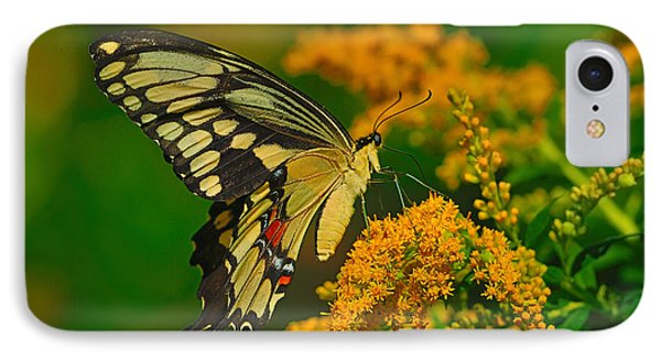 Giant Swallowtail On Goldenrod Phone Case by Tony Beck